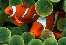 fish tank..