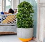 """Pots & Planters - Colour Highlights Range / Satu Bumi's """"Colour Highlights Range"""" of planters add a flash of color to the very industrial yet modern appeal of raw concrete in contemporary standard garden planters."""