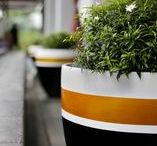 """Pots & Planters - Designer Range / Satu Bumi's """"Designer Range"""" of egg pots, although suitable for outdoor use, are primarily targeted at the interior decoration market. Vibrant rich metallic colours on contrasting white and black backgrounds provide striking pieces of interior décor. The """"Designer Range"""" is perfectly suited to both domestic and commercial interior decoration applications."""