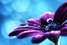 Purple . BLUE
