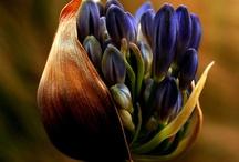 Purple . BROWN