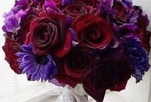 Purple . RED