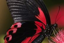 RED . BLACK