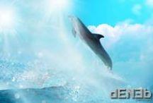"""Dolphins - Delfini / I particularly love dolphins; """"superior~beings"""". Amo particolarmente i delfini, """"esseri superiori""""."""
