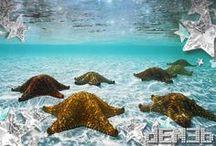 Starfish - Sea Stars - Stelle Marine / Stars on Planet Earth - Stelle sul Pianeta Terra