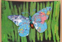 motýli, hmyz