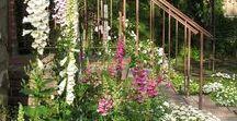 Növény-szeretet (Plant-love), Flower and garden / Minden, ami növény és kert.