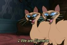 We are siameses if you please....