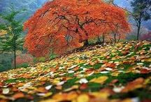 Fall into Autumn / Please pin only Autumn related items. Lets make this board Spectacular! Thank You for following and all your Beautiful Pins!
