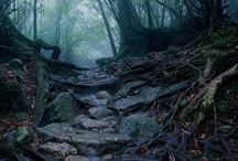 Inspiration: Ancient Forests & Haunted Woods / Old woodlands and creeping forestscapes.