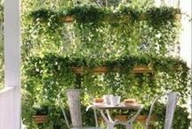 Outdoor / Outdoor Living Spaces:  Decks, Patios, Gardens, etc.