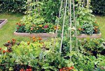 Garden Vegetables & Fruits / by Sondra Booze