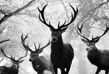 W I L D E R N E S S / NATURE, WILD ANIMALS AND BREATHTAKING LANDSCAPES.