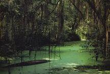 Inspiration: Swampland / Swamp and murk.