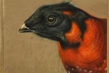 bird paintings / Birds and feathers - beautiful watercolour illustrations, oil paintings and bird designs