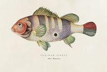 scientific illustration / fish / scientific illustration / fish and other sea creatures