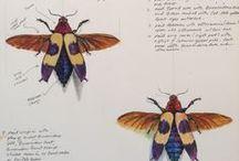 Skizzenbuch | Insekten und Co / Inspiration, Beispiele und Motive rund um Insekten, wie Bienen, Motten und Schmetterlinge, im Skizzenbuch - Naturskizzenbuch Ideen