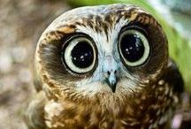 Owl and friends / Nature is perfect!