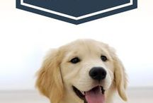 Dog Care / Dog Care: Caring for your family puppy and dog right from the beginning of receiving your new puppy being extremely important to having a socially accepted, disciplined and healthy family dog. http://dogshelper.weebly.com /DogsHelperStore - Dog Care