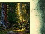 ...........  Nature / Forêt ...........