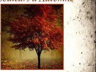 ...... Couleurs d'Automne ....... / couleurs . automne . feuilles mortes . brun . roux . nature . saisons