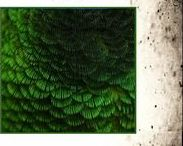 ....................  Verts  ..................