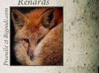 ................. Renards ...................