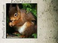 ................... Ecureuils ...................