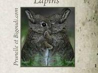 ...................  Lapins  ..................