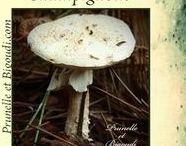 ...... champignons ......