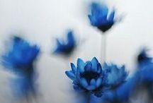 -Beautiful flowers-