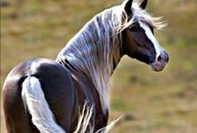 horses / look at my horse my horse is amazing