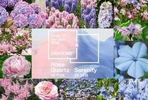 Rose Quartz & Serenity Flowers / Rose Quartz & Serenity - My flower inspirations for garden in 2016