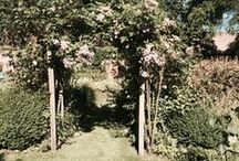 Thurning Hall Gardens / Get married in our beautiful grounds among the flowers and trees of the English countryside. Outdoor wedding ideas in Norfolk UK.