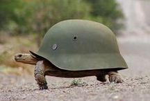 I like turtles / What more is there to say..?