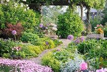 Gardening / by Jade McKay