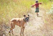 Doggone Getaways / CityDog Magazine has discovered the best doggone getaways in the West.