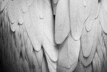 Black & white photos I love