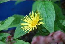 Beplanting / Voorbeelden van mooie beplanting