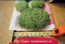 Ozark Mountain Moss / Live and Preserved Reindeer Moss, Moss Balls, Cushion Moss and Sheet Moss for Arts and Crafts.