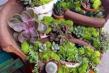 Miniatuur tuintjes