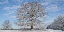 Winter op de Stulp, Lage Vuursche / Natuur, landschap, winter, lage vuursche, nederland