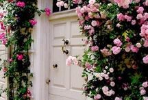 """""""Shut the Front Door"""" / by Debbie Stefanucci"""