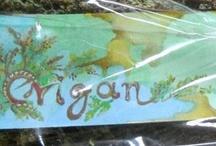 Herbs / bio mountain tea,sideritis
