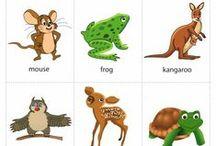 Vocabulario: animales
