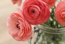 Flowers - Fiori / Tutti i fiori del mondo