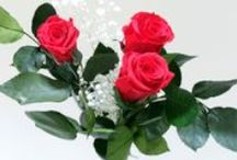 Fiori stabilizzati - Preserved flowers / Collezione di fiori preservati / stabilizzati
