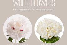 Bianco Avorio - White flowers