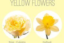 Giallo - Yellow flowers