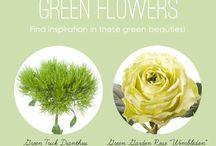 Verde - Green Flowers